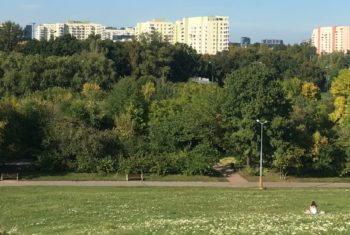 Park miejski z wieżowcami w oddali.