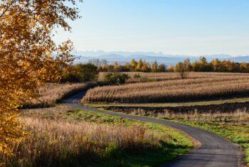 Kręta, wąska ulica pomiędzy polami, w tle drzewa oraz zarys gór. Krajobraz jesienny.