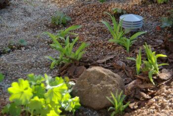 Ogród deszczowy w przybliżeniu. Roślinność, żwir, duży kamień.