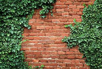 ściana z cegieł porośnięta pnączami